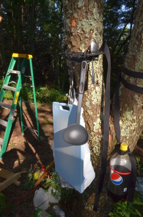 Montie Gear Tree Hook Strap Used Creatively to Keep a Diet Pepsi Bottle Out of the Dirt